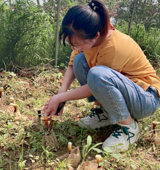 泰山灵芝基地:仿野生环境原木种植